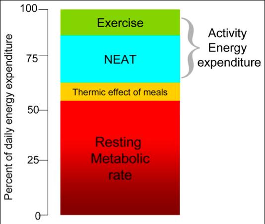 diagram of body metabolism